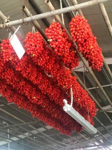 Wahlfach Urban Food 2020: Neapel. Piennolo Tomaten (DOP) hängen in einem Lagerraum am Fuss des Vesuvs © Professur Vogt